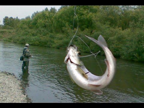 Ловля хариуса Ловля хариуса видео Рыбалка видео смотреть