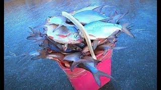 ВІДМІННИЙ КЛЮВАННЯ НА ЗИМОВІЙ РИБАЛЦІ. Зловив риби більше відра)) Глухозимья у нас немає. Підлідної відео.