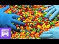 Jelly Belly | Stoned Mode