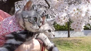 今年もマルとカレンを連れてお花見散歩行ってきました。 1年ぶりのお外...
