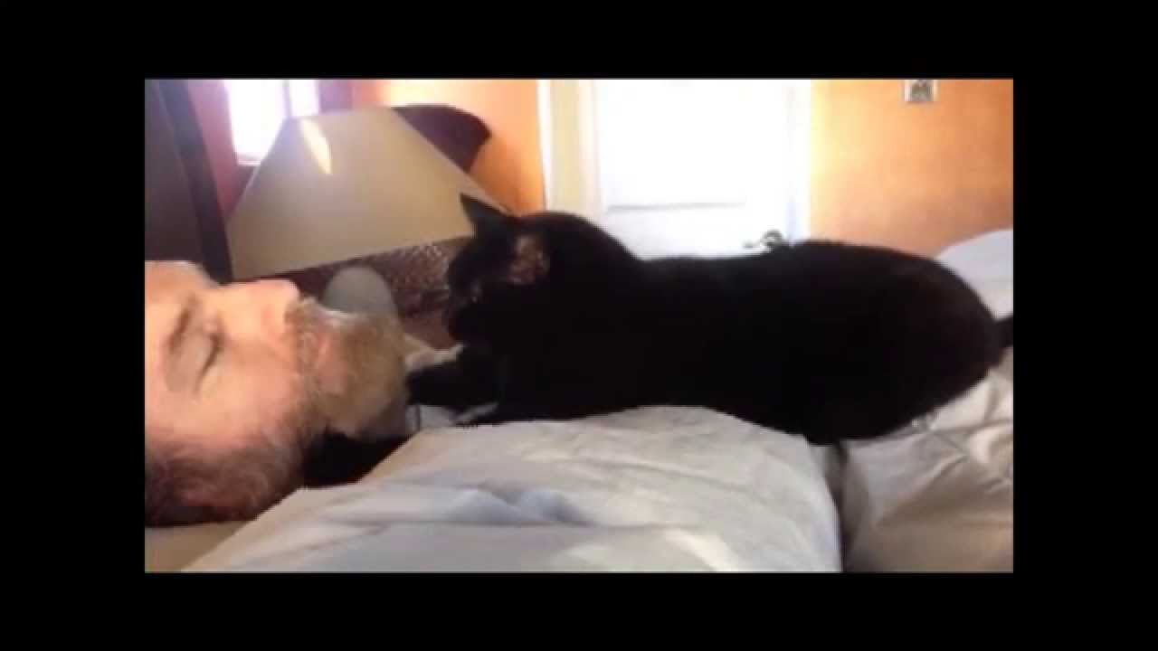 How To Make My Cat Stop Waking Me Up