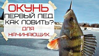Как ловить окуня зимой по первому льду начинающим рыболовам?