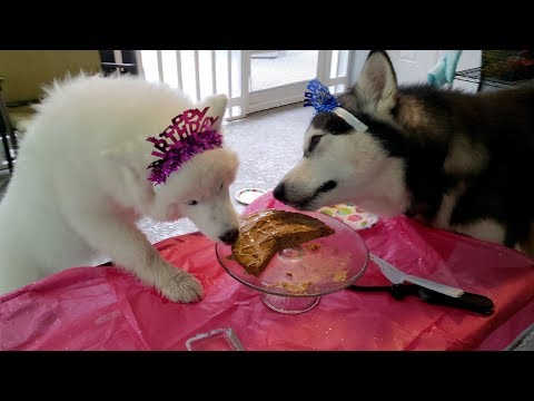 princess'-birthday-party-🐺❣