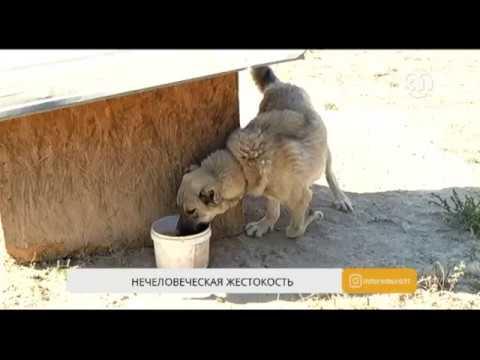 В Казахстане участились случаи жестокого обращения с животными