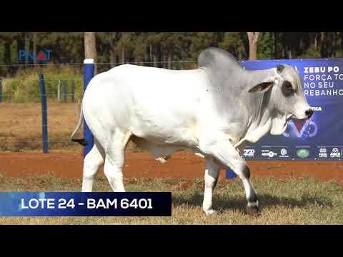 LOTE 24 - BAM6401 - NELORE