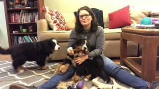 Puppy Teething!! Is your puppy teething and biting too much or too hard?