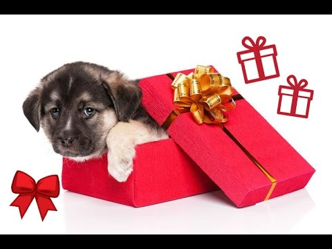 The most emotional reactions to the gift of a puppy COMPILATION REUP