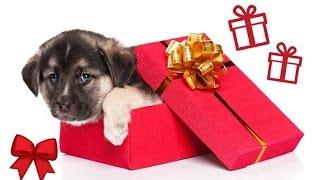 Le reazioni più emozionanti al regalo di un cucciolo [COMPILATION] (RE-UP)
