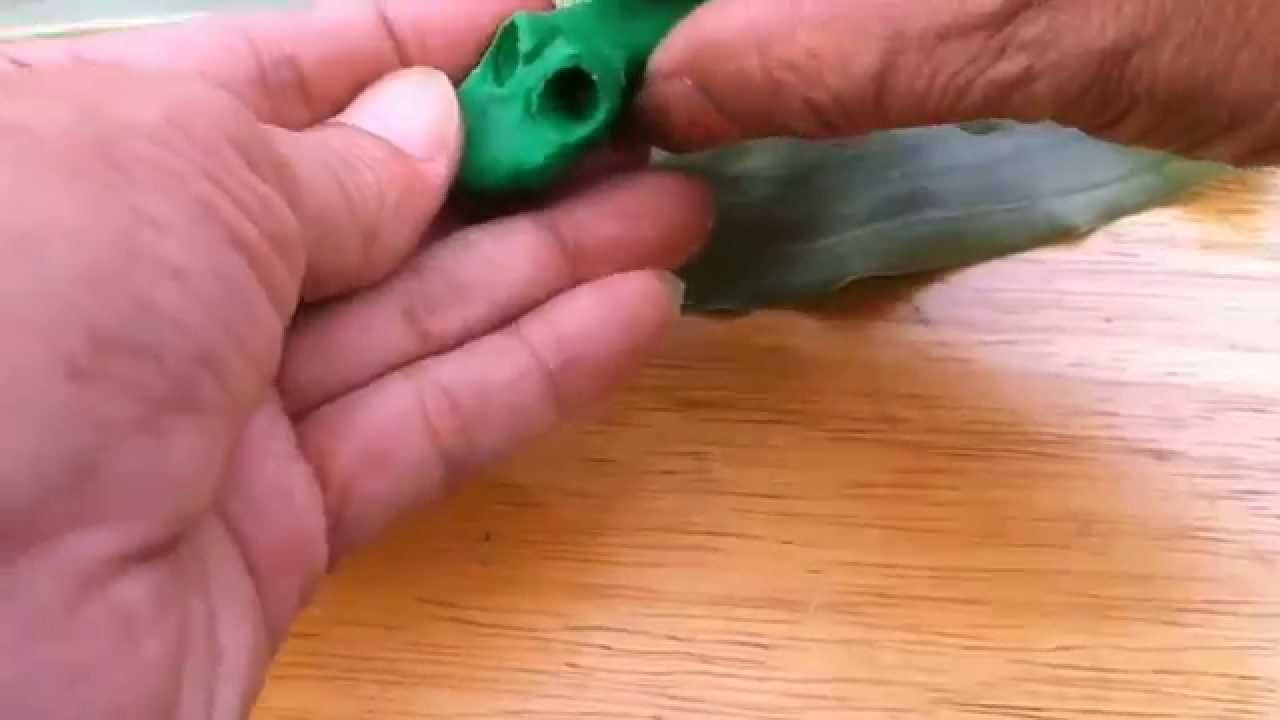 e6396d492ec3 Play Doh - Tree Frog - Frog Eye Beads - Simple - YouTube