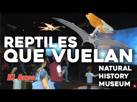 NHM Pterosaurs Exhibit