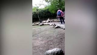 Indignación por el video de un adolescente hostigando a un wallaby en Temaikèn thumbnail