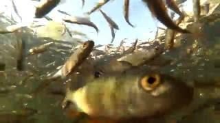 Рыбалка в Казахстане. Река Урал. Кушум