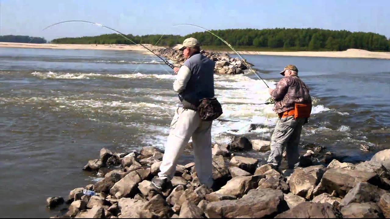 Fishing the lower mississippi river youtube for Ms fishing reports