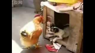 Животный инстинкт