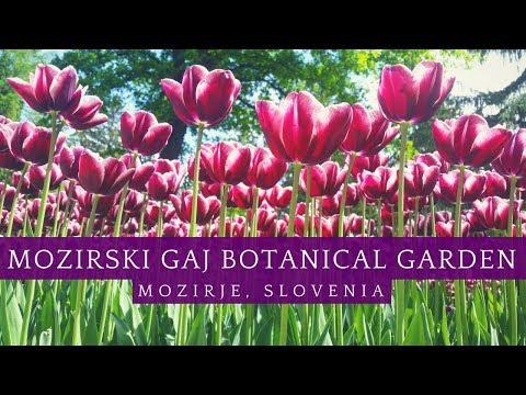 Springtime Magic in Mozirski Gaj Botanical Garden!🌷  Slovenia Vacation Travel Vlog
