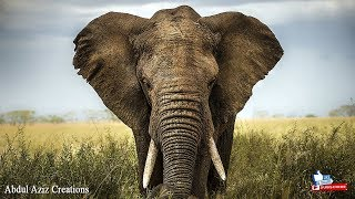 The Elephant Hd Wallpaper