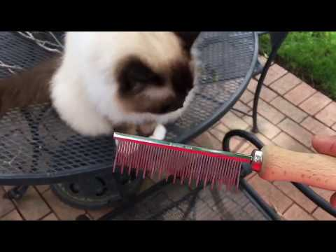 Best Cat Shedding Comb - Combing Ragdoll Cats with the Safari Comb - Floppycats