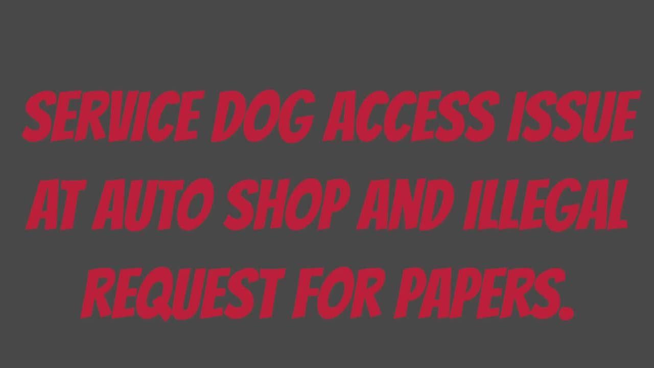 Essay about service animals