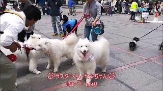 神戸ポートアイランド内・市民広場で開催されたわんわんマルシェに行っ...