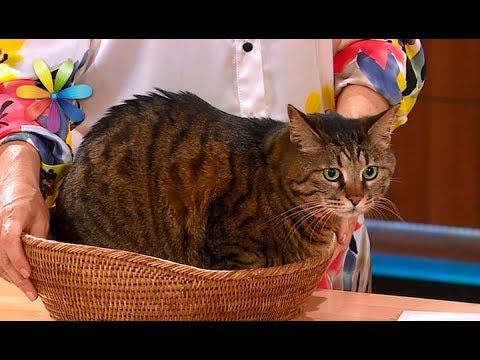 Вопрос: Как запретить коту залезать на газовую плиту?