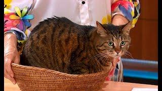 Как отучить кота ходить по кухонному столу – Все буде добре. Выпуск 1078 от 29.08.17