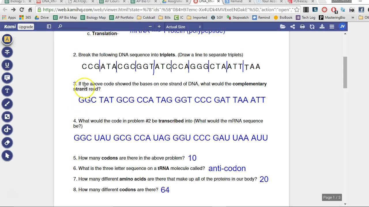Dna Mrna Trna And Translations