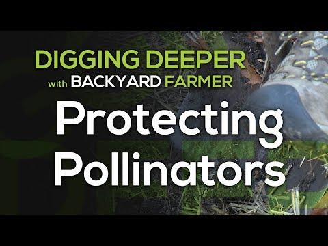 Digging Deeper Pollinators