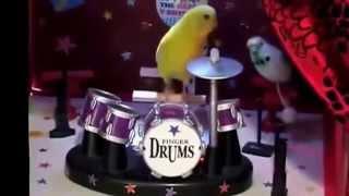 Лучшие видео приколы Приколы с попугаями 1