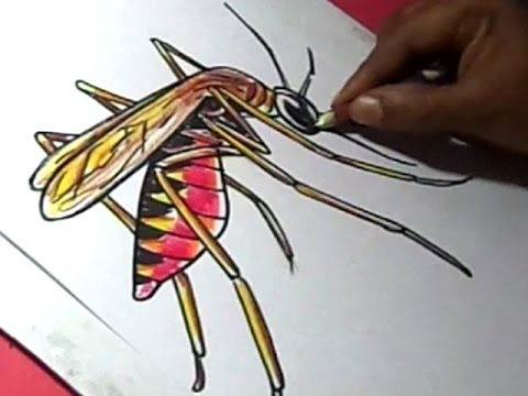 how-to-draw-malaria-mosquito-drawing-for-kids-step-by-step