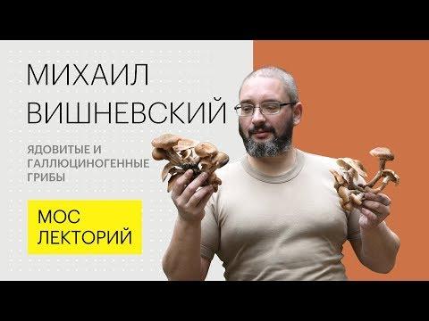 Вопрос: Атлас определитель от Земли до неба какие примеры несъедобных грибов?