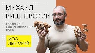 Ядовитые и галлюциногенные грибы // Михаил Вишневский Лекция 2018