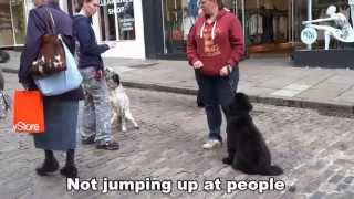 Winslow - Newfoundland Puppy - 12 Day Dog Boot Camp At Adolescent Dogs Uk