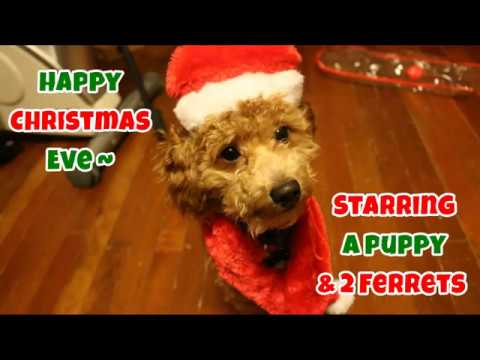 Happy Christmas Eve: Starring A Puppy & 2 Ferrets - Christmas 2016 - VOL. 1