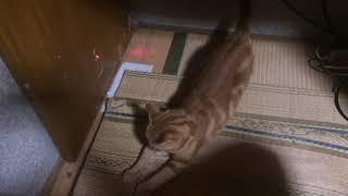 遊ぶ猫 thumbnail