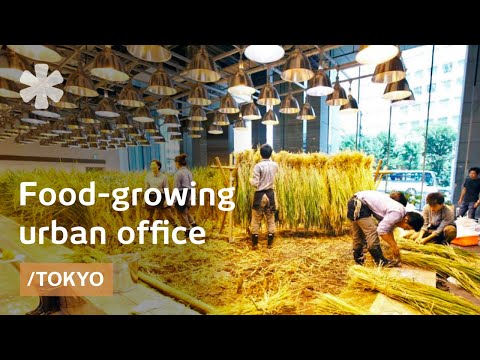More Than Work Tokyo Office Grows Own Food In Vertical