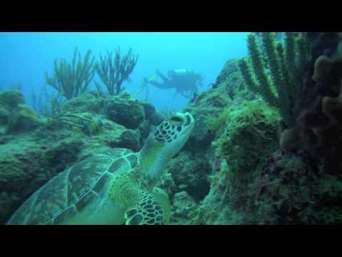 Week 51, 2010 ( Week Log ) Ocean Explorers Dive Center St. Maarten / St. Martin.