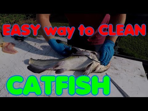 Clean a catfish your way - Trotliners