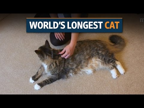 High-jumping llama and mega cat set new world records