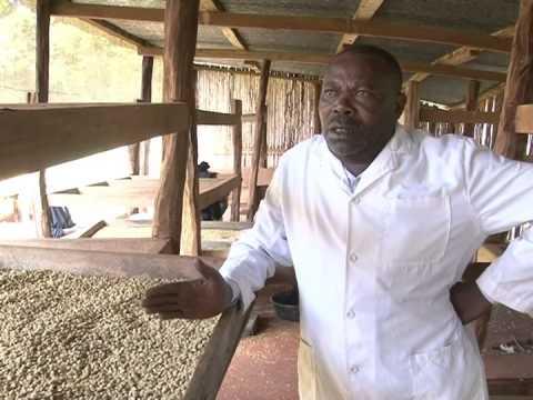 COFFEE PROCESSING IN KENYA