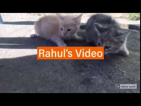 [CATS LOVER MUST WATCH] - Cute Cats Videos - Love of Cats