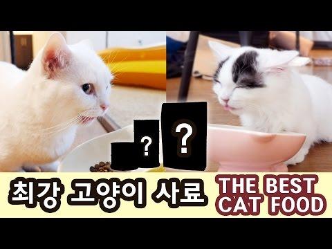 사료 1700종 성분 분석! 최고의 고양이 사료는? THE BEST CAT FOOD
