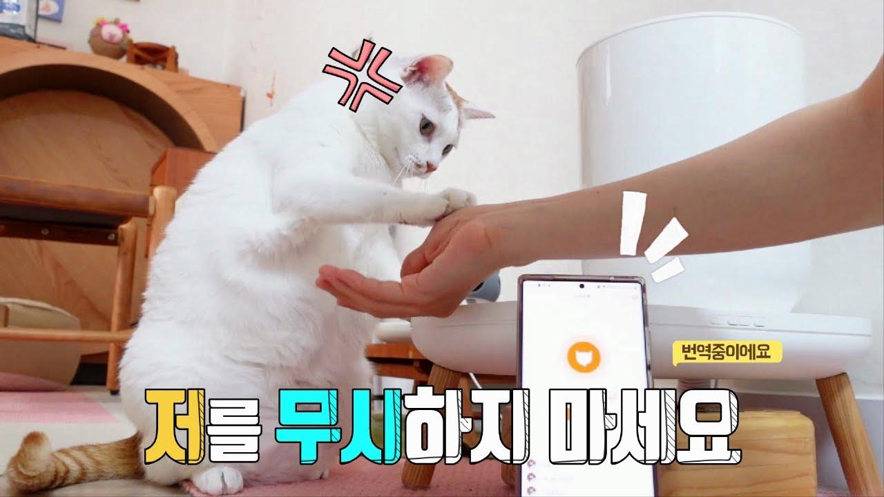 고양이 번역 어플을 사용해보았어요
