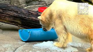 Animals Getting Ice and Keeping Cool on a Hot Day - Cincinnati Zoo