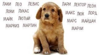 Клички, имена для собак