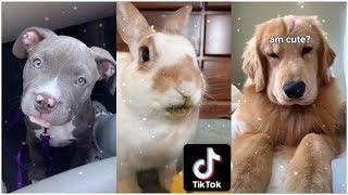 Cutest & funniest animals on TikTok compilation (Pets + Exotic animals)