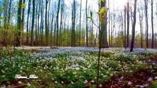 ❀ Anniversary Song ❀ - Giovanni Marradi