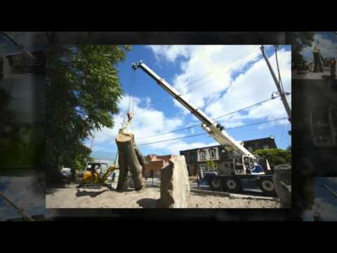 Tree Service Milwaukee Wi 414 659 3860 Branch Managers Care Removal