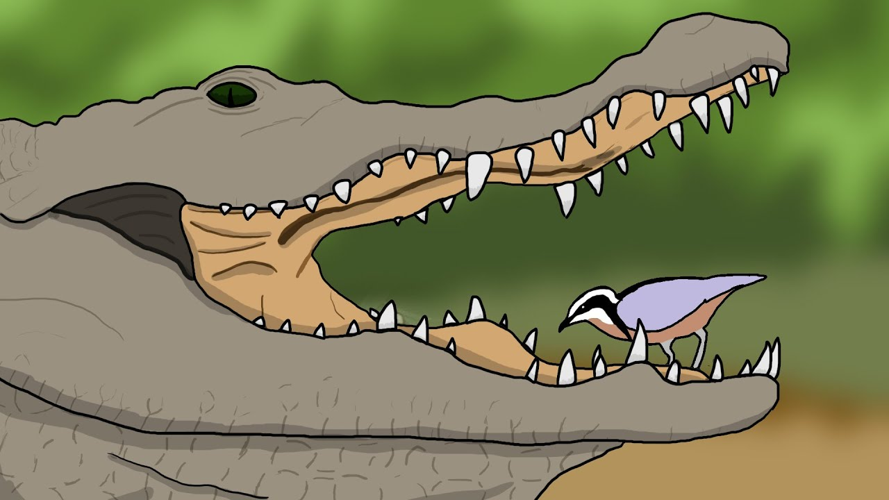 bird and crocodile relationship