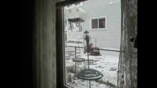 Squirrel Caught His Tail In Bird Feeder's Pole.