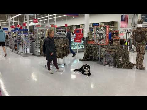 1 Year Old Border Collie | Best Collie Dog Training | Off Leash K9 | Board And Train | Oklahoma